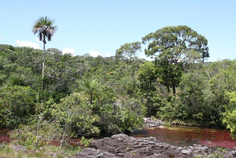 Canio Cristales山河 哥伦比亚 免版税库存照片