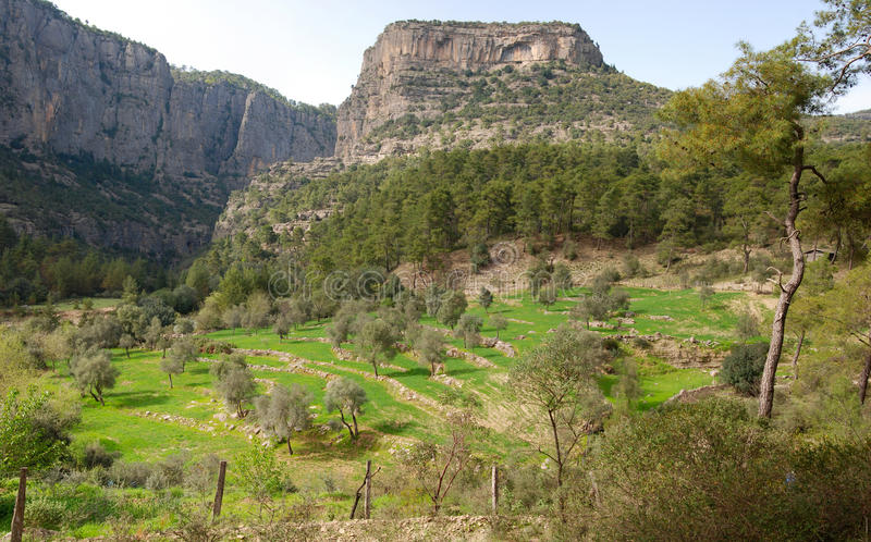Canion in het bosje van Turkije en van de pijnboom royalty-vrije stock afbeelding