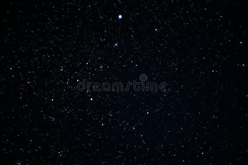 Canis Major konstellation royaltyfria foton