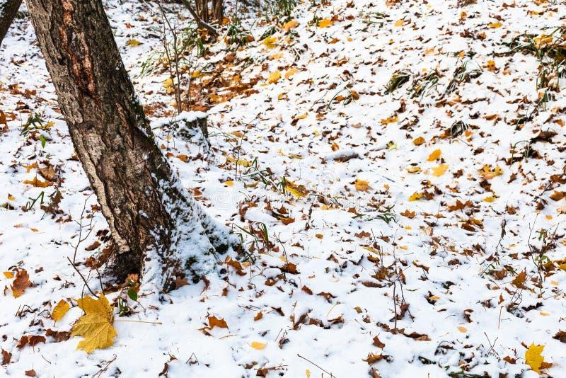 Caniveau dans la forêt couverte de première neige photographie stock libre de droits