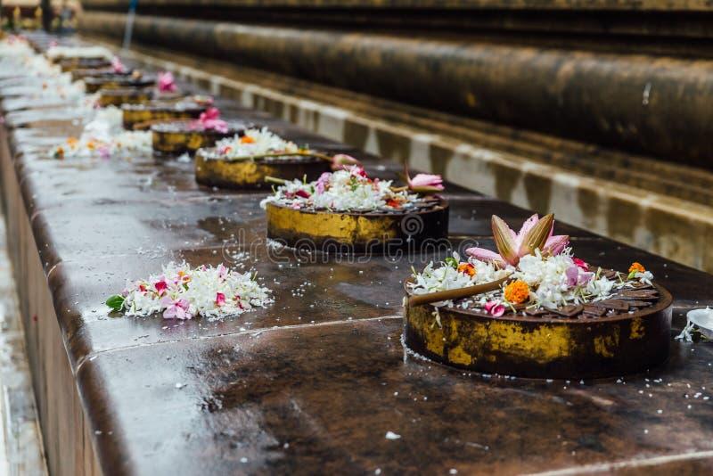 Cankamana修道院步行阁下走在有开花的莲花和花的这些平台的菩萨在摩诃菩提寺 库存图片