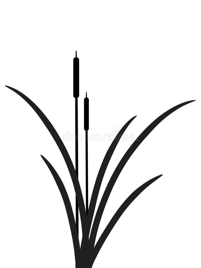 Canna illustrazione vettoriale