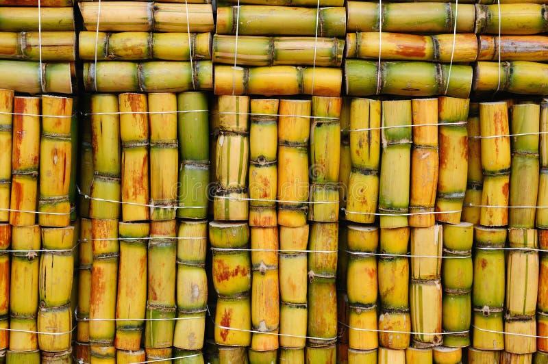 Canna da zucchero fotografia stock libera da diritti
