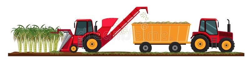 Canna da zucchero che coltiva raccolto illustrazione vettoriale