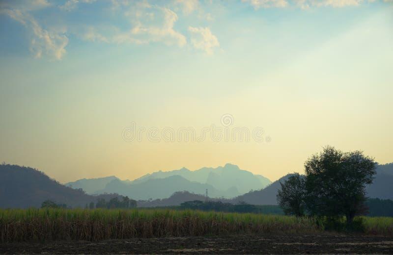 Canna da zucchero con catena montuosa nel fondo, Tailandia di nordest fotografia stock libera da diritti