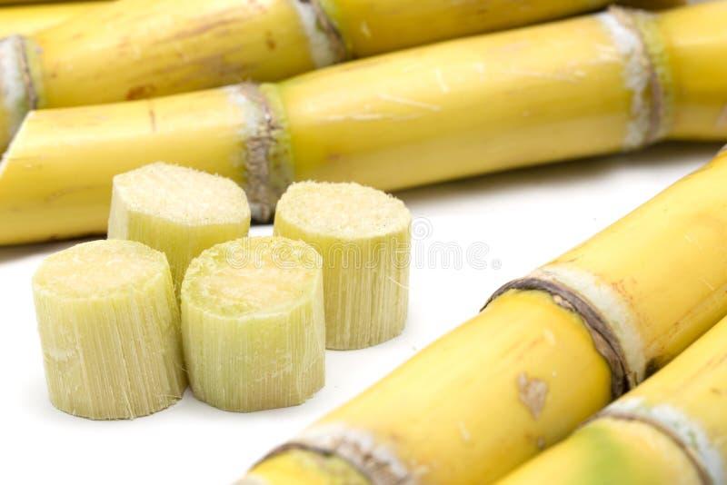 Canna da zucchero e pezzi di canna da zucchero immagine stock libera da diritti