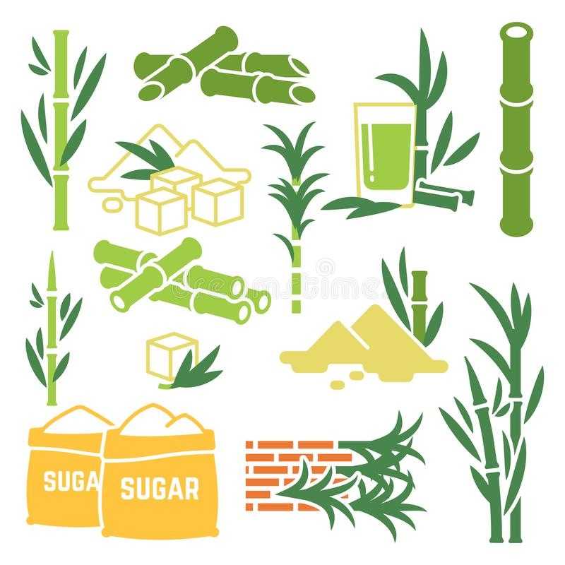 Canna da zucchero, icone di vettore del raccolto della pianta della canna da zucchero isolate su fondo bianco illustrazione vettoriale