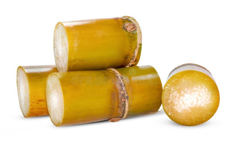 Canna da zucchero isolata su bianco fotografie stock libere da diritti
