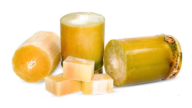 Canna da zucchero isolata su bianco fotografia stock