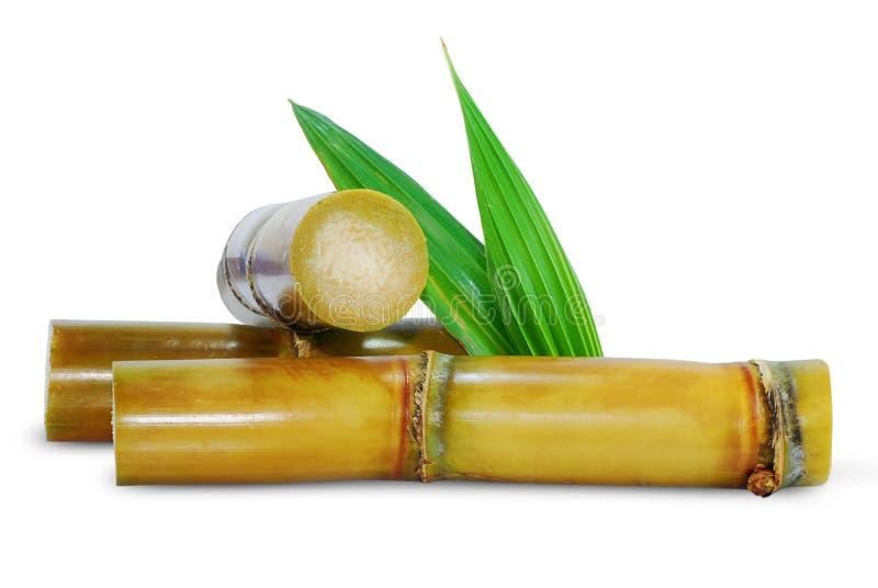 Canna da zucchero isolata su bianco fotografie stock