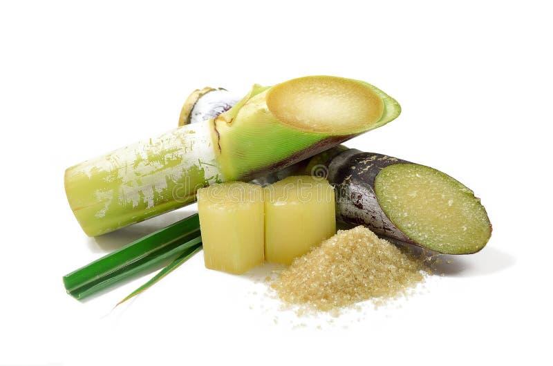 Canna da zucchero isolata su fondo bianco immagine stock