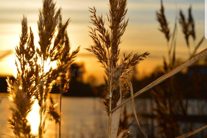 Canna della depressione di tramonto immagine stock