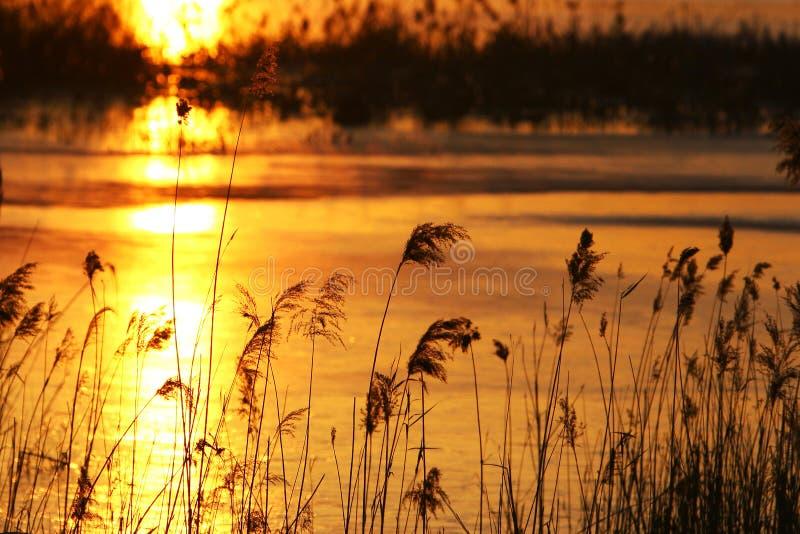 Canna di autunno fotografie stock
