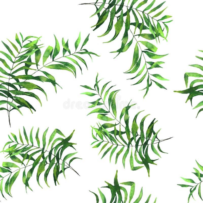 Canna di foglia di palma realistica del fan dell'acquerello senza cuciture del modello royalty illustrazione gratis