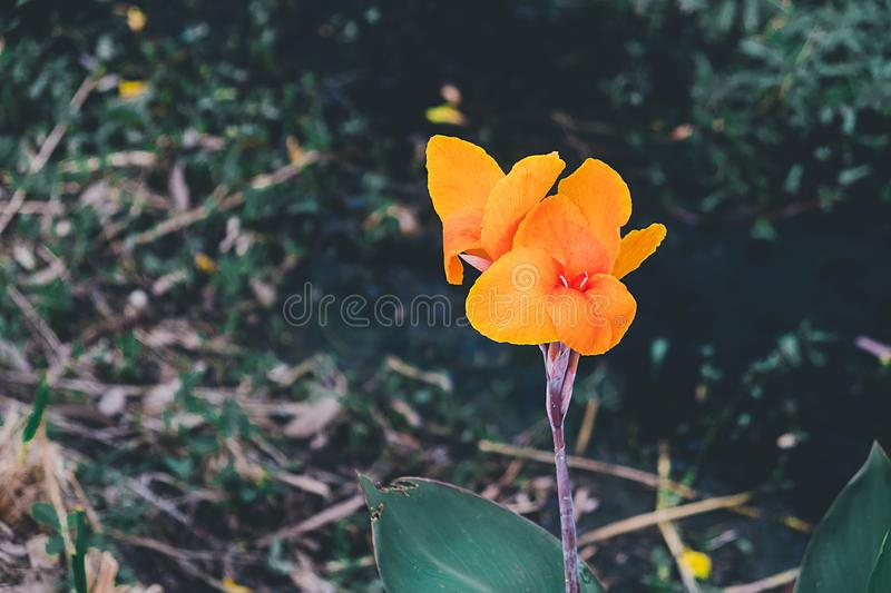 Flowers bloom in the garden royalty free stock photos