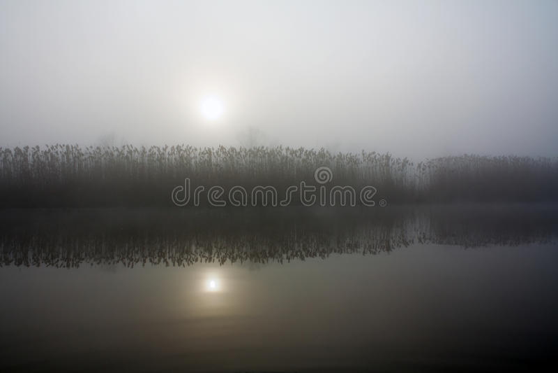 Canna in nebbia immagini stock libere da diritti