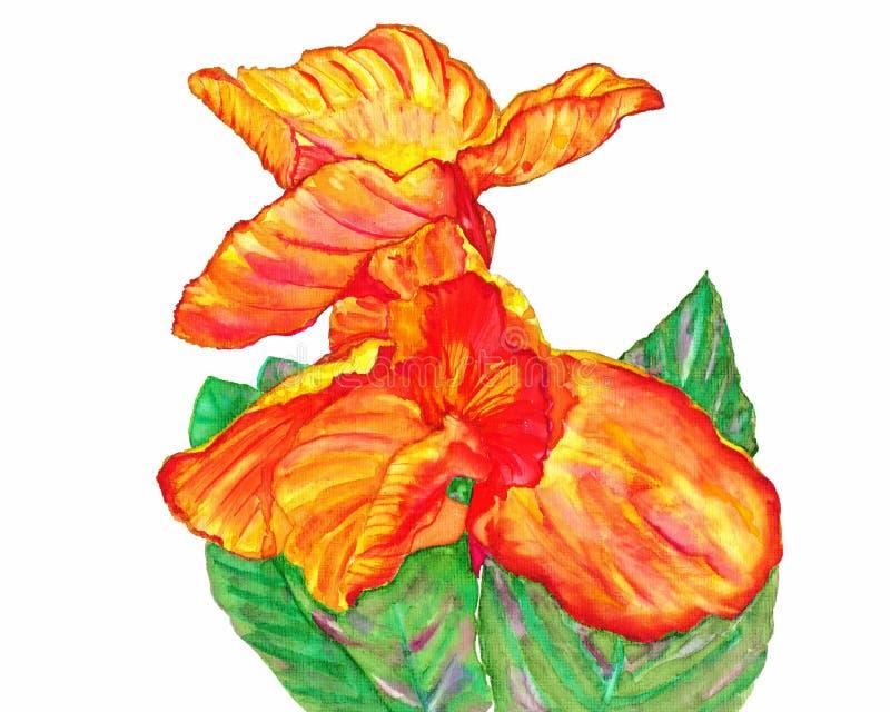 Canna o Canna Lily Plants Watercolor Painting ilustración del vector