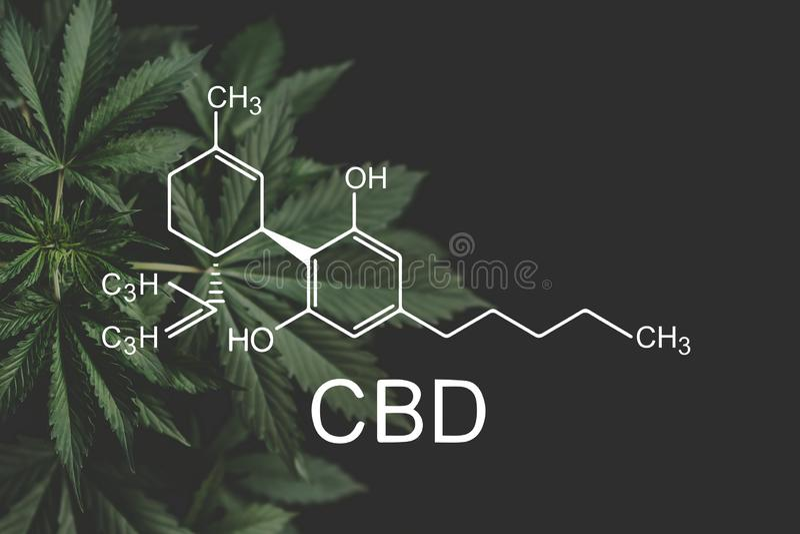 Cannabidiol формулы CBD Индустрия пеньки, растя марихуана, дело despancery cannabinoids и здоровье стоковые фотографии rf