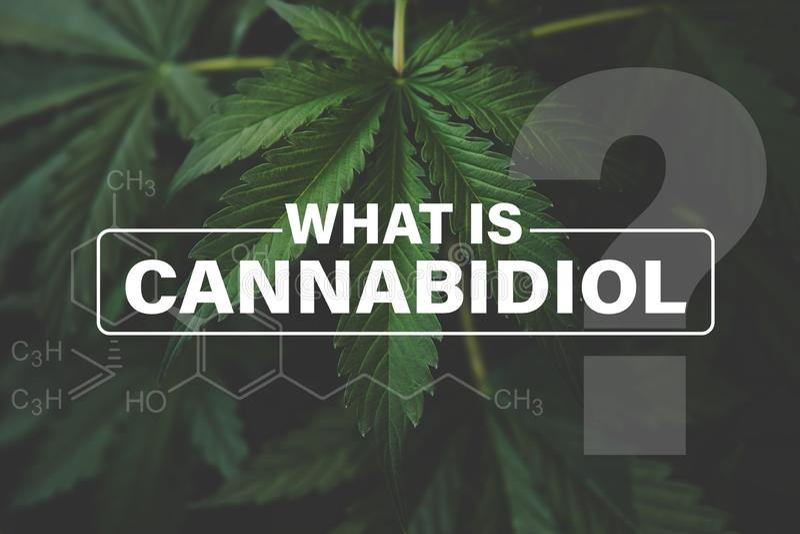 Cannabidiol CBD惯例,印度增长的大麻,背景绿色,大麻耕种大麻 皇族释放例证