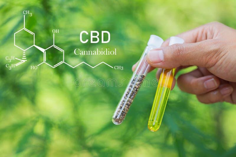 Cannabidiol CBD Oil Chemical Formula Prodotti di marijuana premia in crescita Concetto di cannabis medico fotografia stock libera da diritti