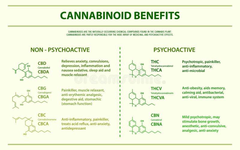 Cannabinoid beneficia infographic horizontal ilustração royalty free