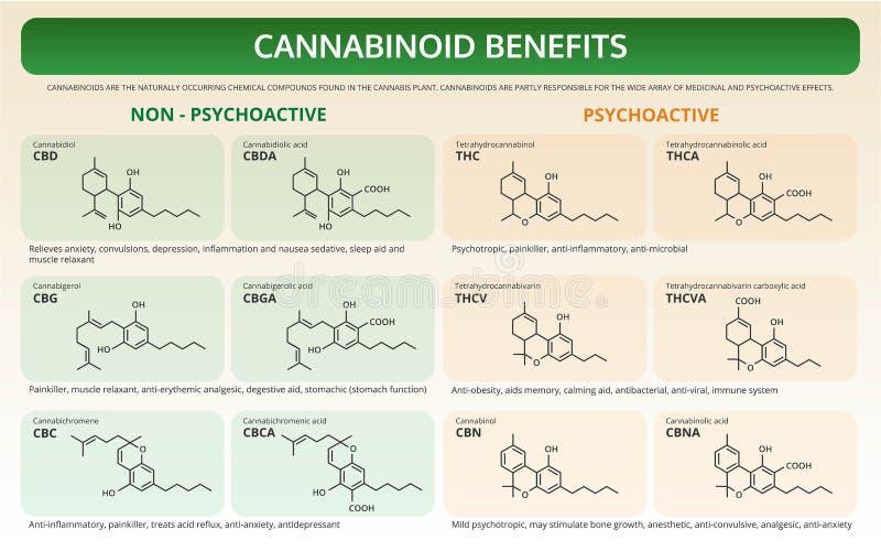 Cannabinoid Benefits horizontal textbook infographic stock illustration