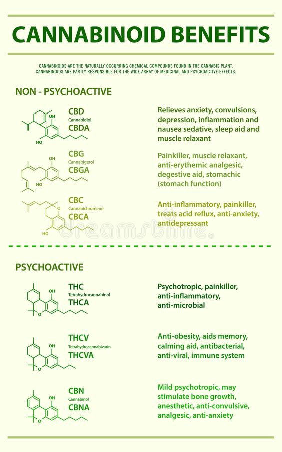 Cannabinoid benefits vertical infographic vector illustration