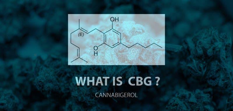 Cannabinoid général - cannabigerol CBG Pyrophosphate et acide géranyliques d'Olivetolic dans des bourgeons de marijuana photographie stock