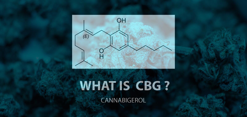 Cannabinoid geral - cannabigerol CBG Pirofosfato e ácido Geranyl de Olivetolic nos botões da marijuana fotografia de stock