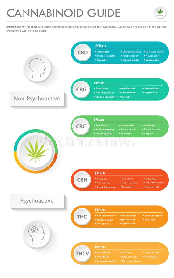 Cannabinoid Guide vertical business infographic royalty free illustration