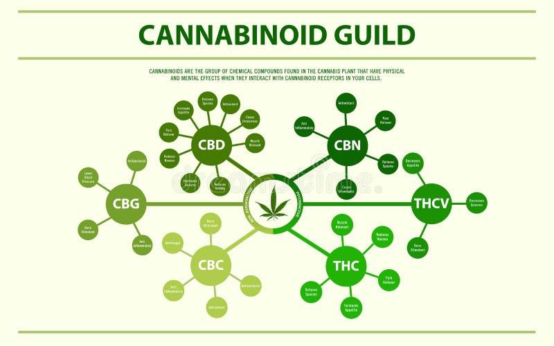 Cannabinoid przewdonika horyzontalny infographic royalty ilustracja