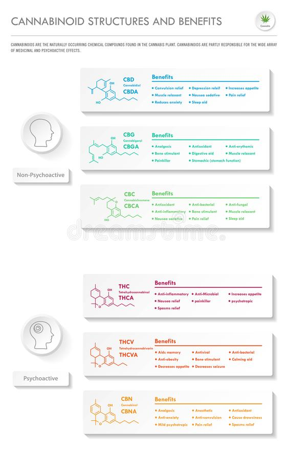 Cannabinoid Stuctures and Benefits vertical business infographic stock illustration