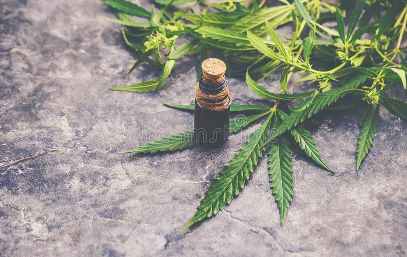 Cannabisört och sidor för behandlingbuljong, tinktur, extrakt, olja arkivbild