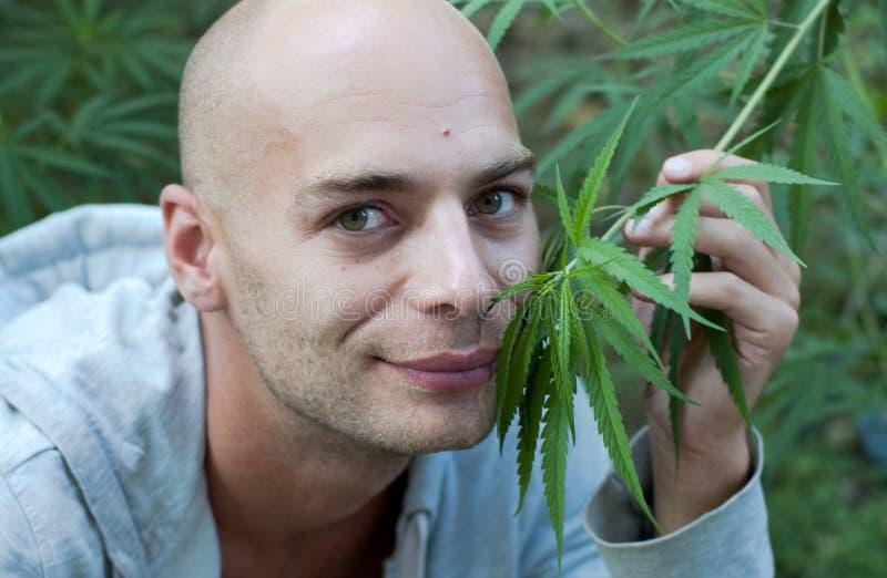 Cannabis imagem de stock