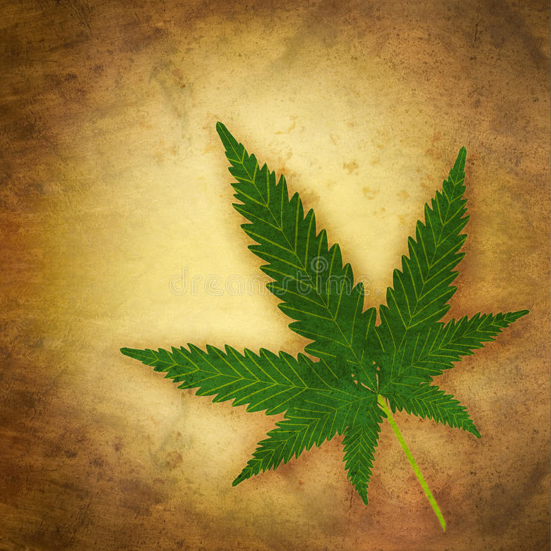 Cannabis. Leaf in grunge style vector illustration