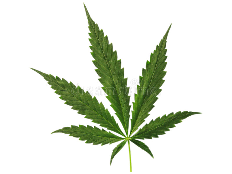 Cannabis stock photo
