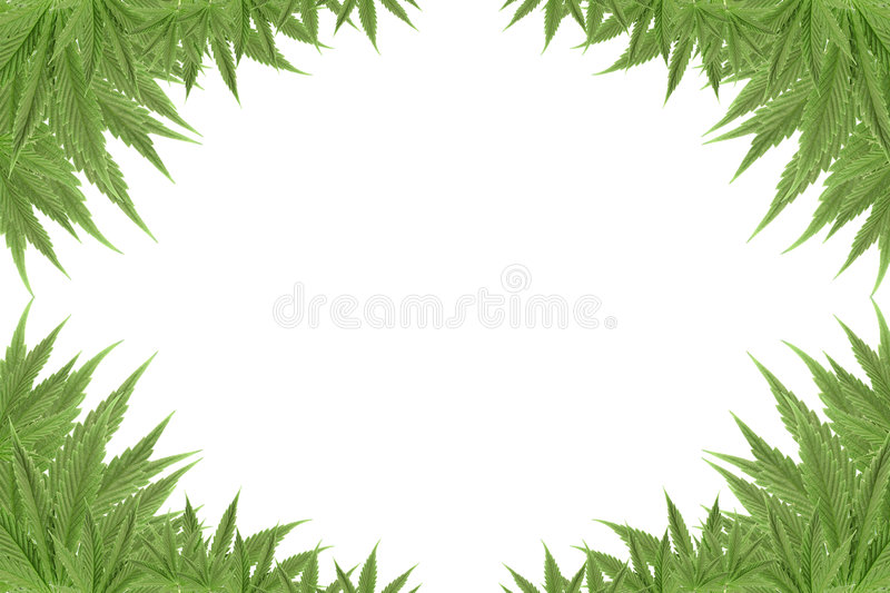 Cannabis photo stock