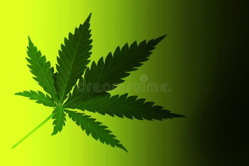 cannabis vektor illustrationer