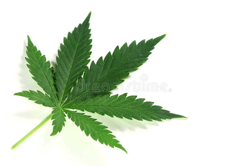 Cannabis imagens de stock royalty free