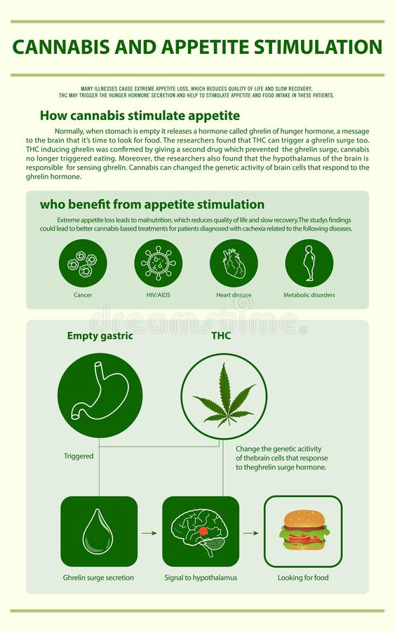 Cannabis and Appetite Stimulation vertical infographic. Illustration about cannabis as herbal alternative medicine and chemical therapy, healthcare and medical vector illustration