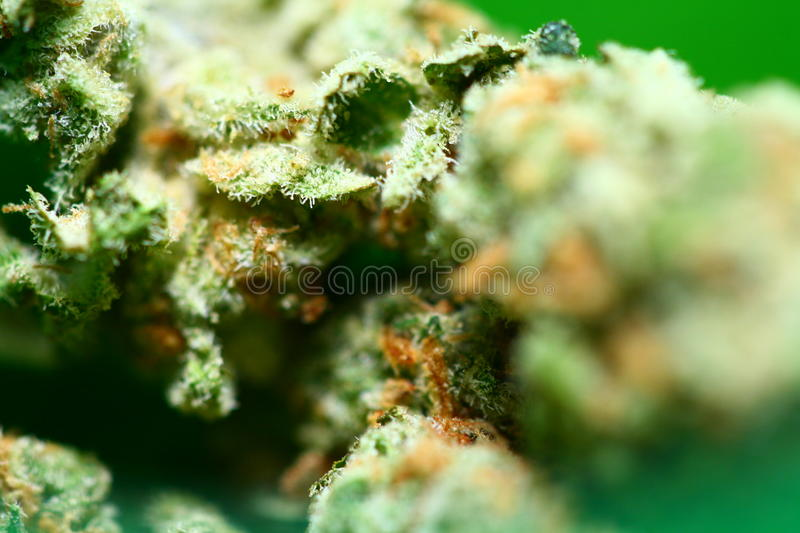 Cannabis Buds. Close up on a bud of marijuana royalty free stock photo