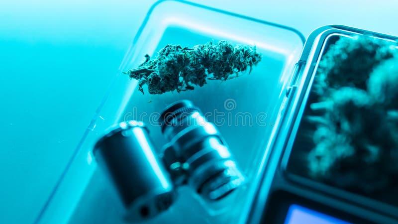 Cannabis buds in super macro view. Medical legal marijuana in 2019 royalty free stock image