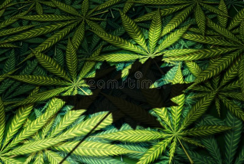 Cannabis Canada Law. And canadian marijuana legalization regulations as a group of leaves with a shadow of a maple leaf as a recreational and medical drug in a stock illustration
