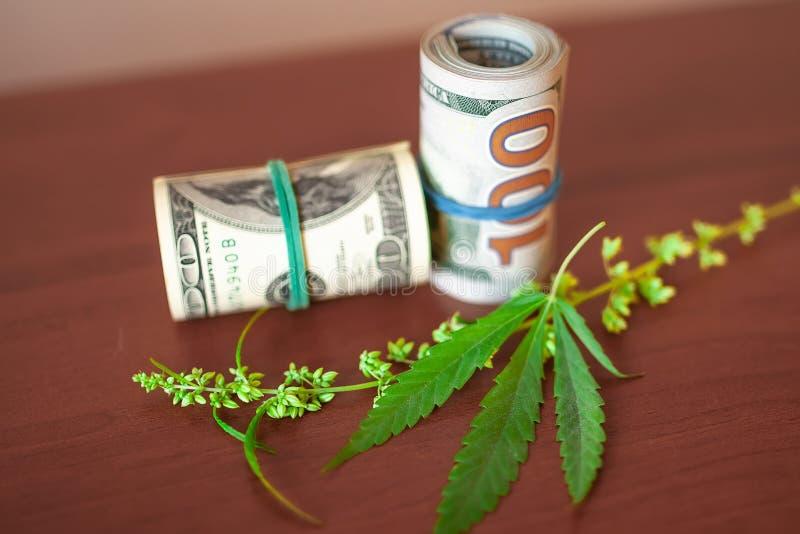 Cannabis CBD met zaden en dollars in geld met een elastiekje wordt gebonden dat Concept de productie van marihuanaproducten en royalty-vrije stock foto's