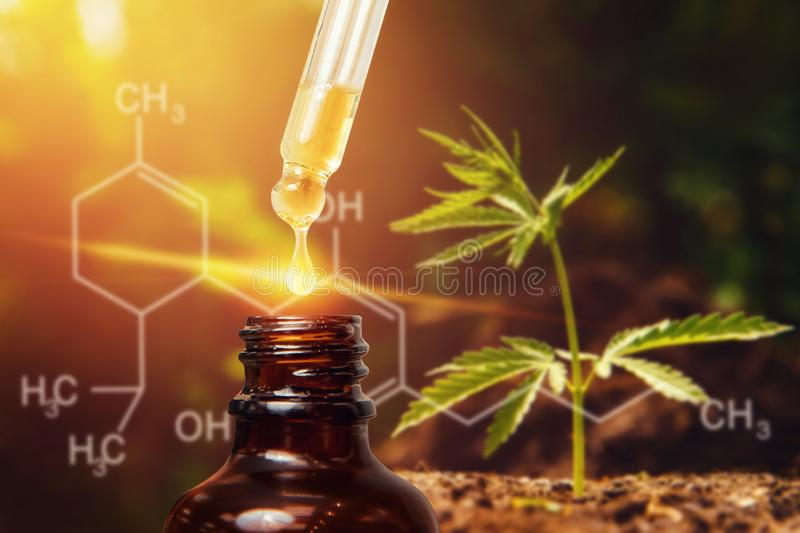 Cannabis CBD oil extracts in jars herb and leaves. Concept medical marijuana stock photography