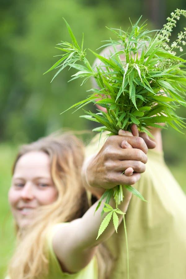 Cannabis da terra arrendada dos pares imagem de stock royalty free