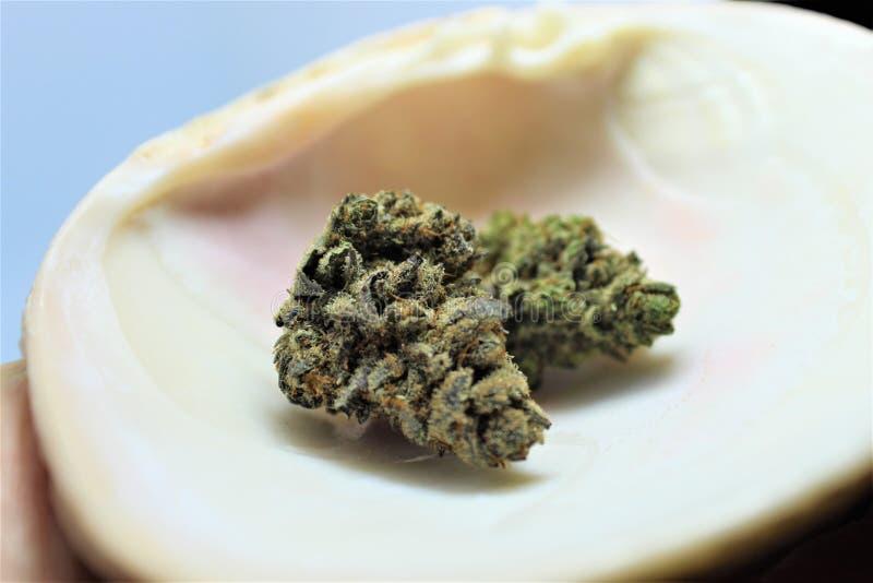 Cannabis di Harlox CBD dal dispensario medico Arizona immagini stock libere da diritti