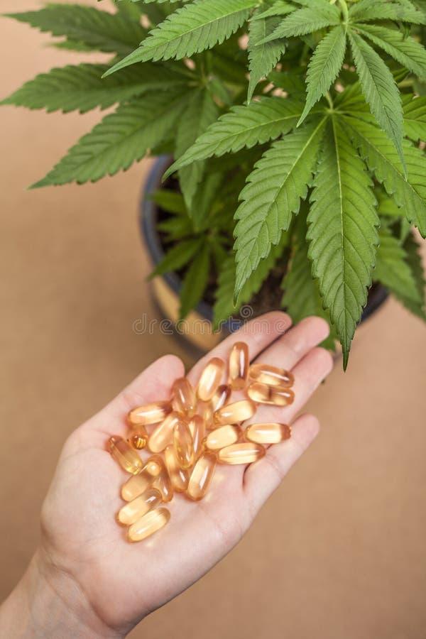Cannabis e medicina fotografia stock libera da diritti