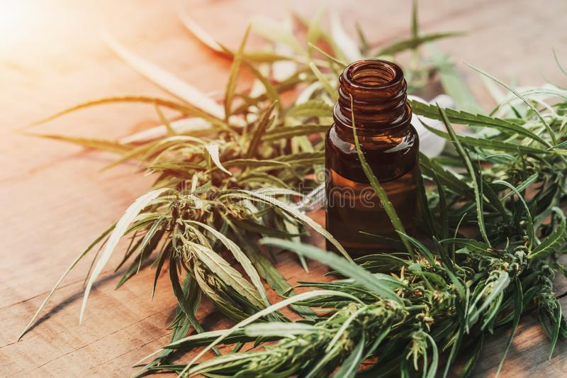 Cannabis herb and leaves with oil extracts in jars. medical concept royalty free stock image