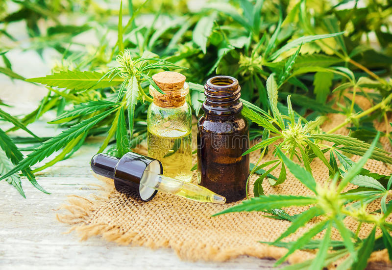 Cannabis herb and leaves for treatment stock images